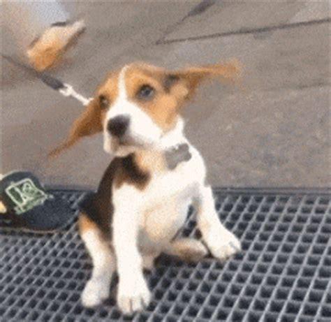 imagenes gif wasap imagenes gif de perros orejones para whatsapp gratis