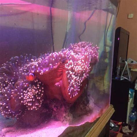 cara membuat filter aquarium air laut sederhana cara membuat akuarium air laut sederhana untuk pemula