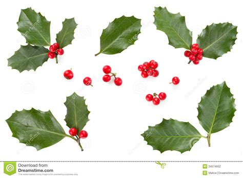 Christmas Plant Decoration Holly Leaves And Berries Stock Photography Image 34574652