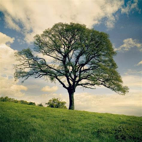 40 naturally beautiful photos of trees psdfan