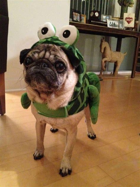 pug frog costume the world s catalog of ideas