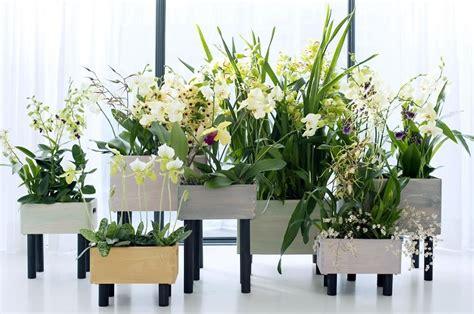 fiori da interni fiori da interno ecco alcune variet 224 perfette per l