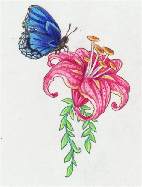 Butterfly Colour butterfly and flower drawing colour butterfly on flower