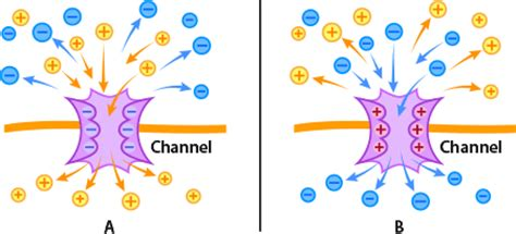 protein channel protein channels ask a biologist