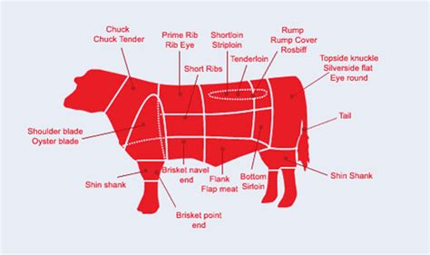 prime rib diagram beef steer diagram beef section diagram elsavadorla