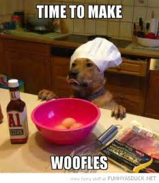 time to build time to make woofles funny as duck funny pictures