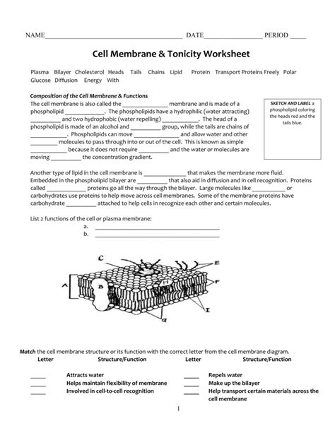 cell membrane coloring worksheet answers osmosis and tonicity coloring worksheet answers