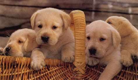 how many times do puppies a day are you a germaphobe proprofs quiz