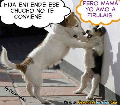 imagenes de memes animales los mejores memes de animales humor taringa
