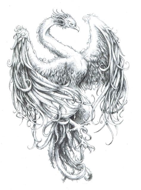tattoo phoenix sketch phoenix by xiphoidlies on deviantart