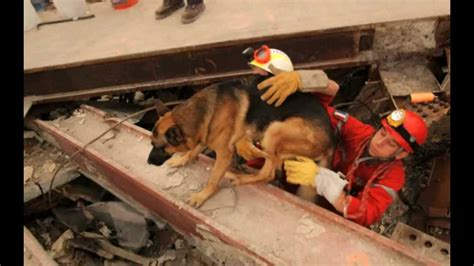 9 11 Rescue Workers Detox by 911 K 9 11 Photos Of Search And Rescue Dogs At