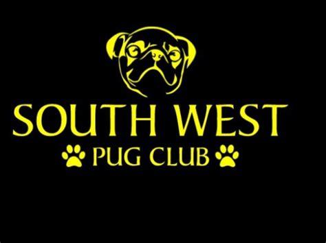 pug owners club south west pug club swpugclub