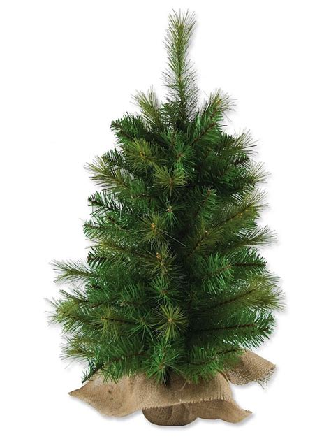 Tree Table Top by Balsam Pine Table Top Tree 65cm Trees The