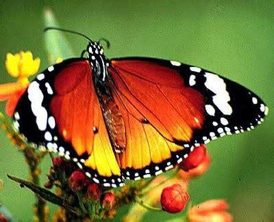 imagenes sobre mariposas banco de imagenes y fotos gratis octubre 2014