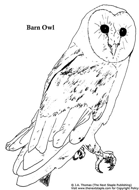 barn owl coloring pages for adults coloring pages