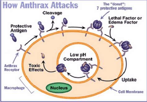 Obat Hewan Trimezyn S 250 Gram epidemiologi penyakit menular anthraks