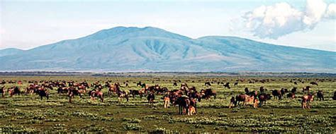 Boneka Bantal Running Serengeti Animal Kingdom the serengeti wwf