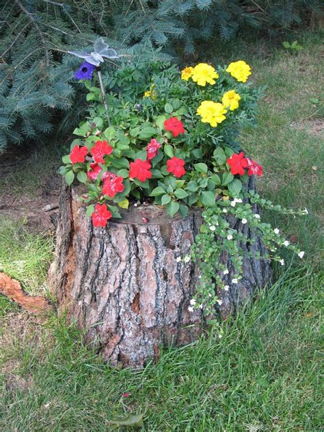 tree stump projects images  pinterest tree
