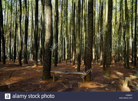 thin tree thin tree stock photos thin tree stock images alamy