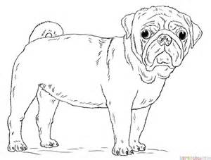 how to draw a pug for how to draw a pug step by step drawing tutorials