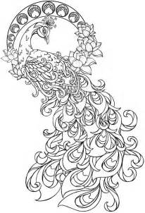 cool coloring pages for adults cool coloring pages for adults peacock az coloring pages