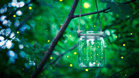 chaising fireflies does finding that micro moment feel like chasing fireflies