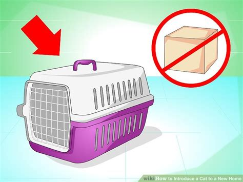how to introduce a cat to a how to introduce a cat to a new home with pictures wikihow