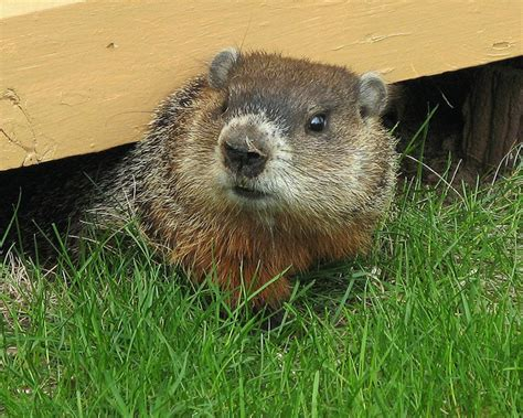 groundhog day like groundhog day 2014 your savings could take a hit if phil