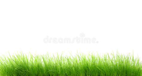 bagnata foto erba bagnata fotografia stock immagine di acqua verde