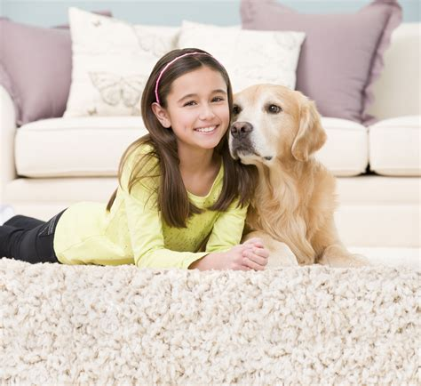 Remove Mildew From Carpet by Carpet Cleaning West Seattle Wa Chem Dry Of Seattle