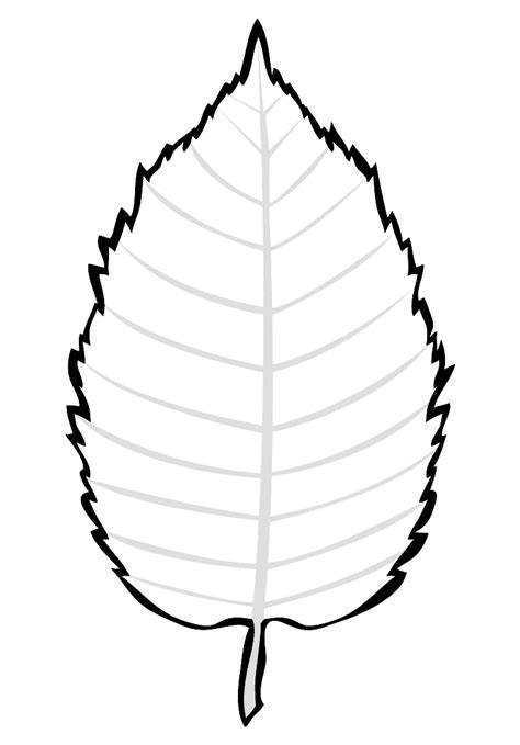 birch leaf coloring page coloring page birch leaves