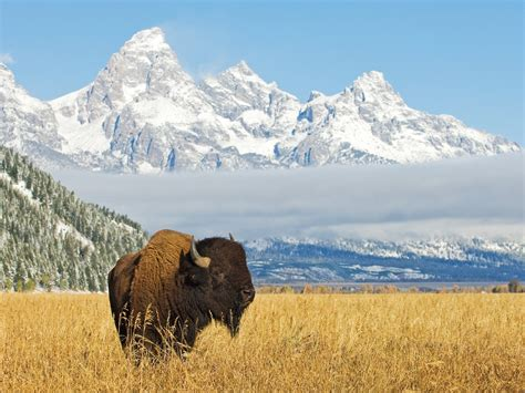 Home Interior Western Pictures by Grand Teton National Park Learn About This Rv Destination