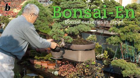 japanese bonsai nursery youtube