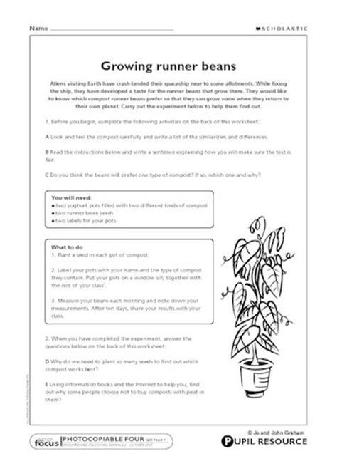 design an experiment ks2 growing runner beans primary ks2 teaching resource
