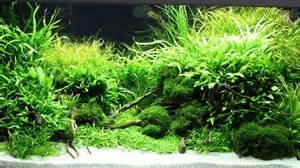 aquascaping plants l aquascaping ou comment recr 233 er un paysage dans mon aquarium