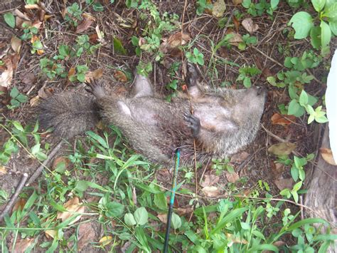 groundhogs cga in a vga world