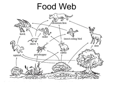 W Is For Web Coloring Page by Food Webs 171 Mr Calaski