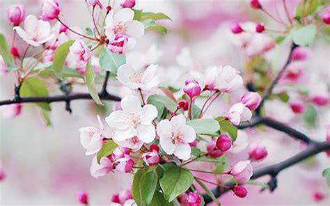 Fleurs De Printemps c 233 l 233 brons le printemps en fleurs fleuriste bordeaux
