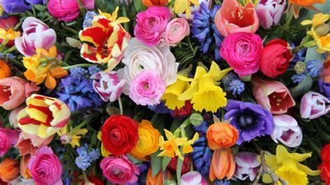 fiori gennaio quali sono i fiori perfetti per un matrimonio a gennaio