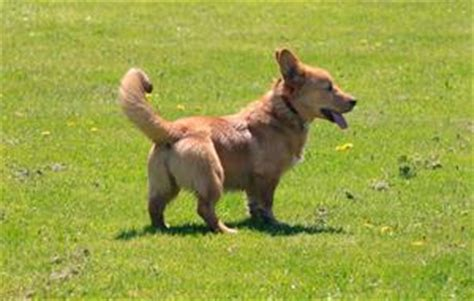 i cani testi i test dna veterinari per i cani russelmobley