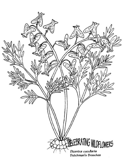 broom tree coloring page carnivorous plant coloring download carnivorous plant