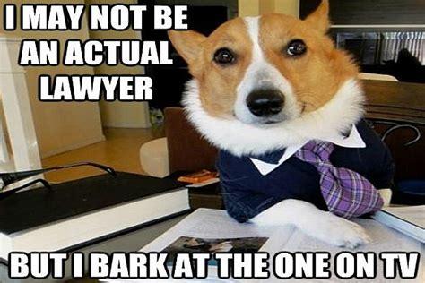 Dog Attorney Meme