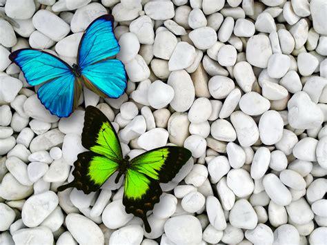 butterfly wallpaper for macbook 2560x1920 blue green butterfly desktop pc and mac wallpaper
