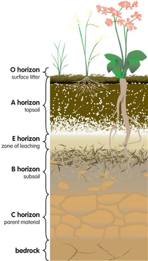 layers of the soil diagram soil horizons diagram quotes
