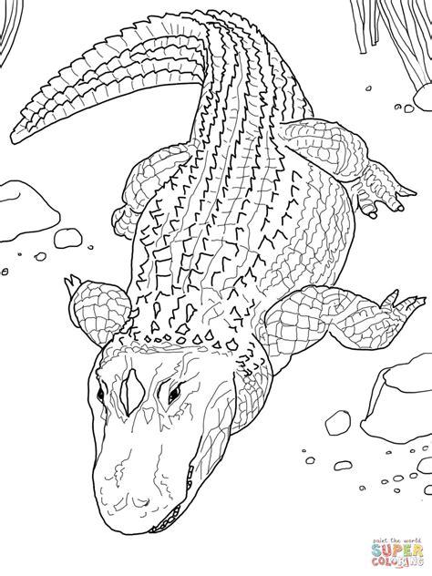 Nos Jeux De Coloriage Alligator 224 Imprimer Gratuit Page Coloriage Imprimer Pour Gar On L