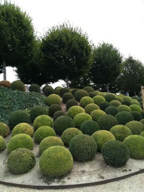 Landscape Pictures With Balls Boxwood Topiary Spheres Garden Ing