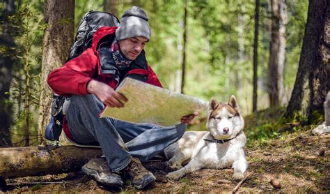 hiking dogs hiking gear guide 13 items you need before going on a hike with dogs