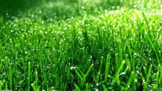 green grass wallpaper 17657 open walls