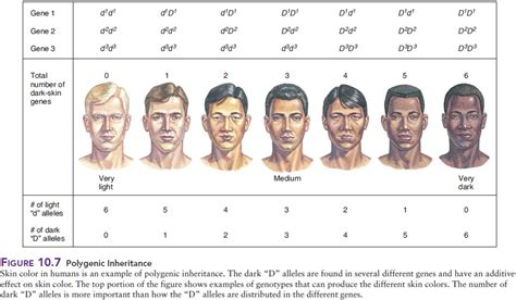 skin color genetics science homework becker science