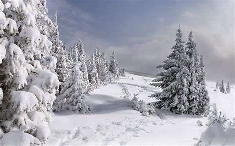 define magnificent magnificent trees in winter widescreen wallpapers amazing